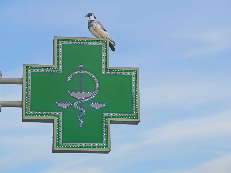 Photo of a pharmacy sign. A pigeon is sitting on the sign.