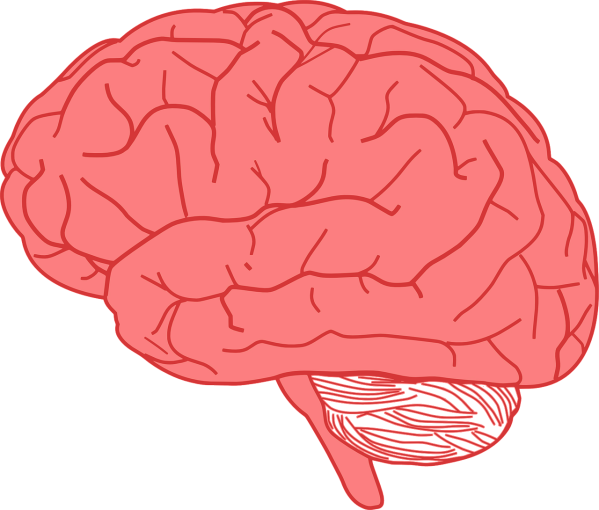 clipart showing a brain